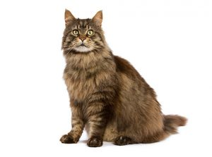 cat-breed-landing-hero-1